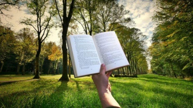 Åpen bok holdt opp foran eng med tre.foto