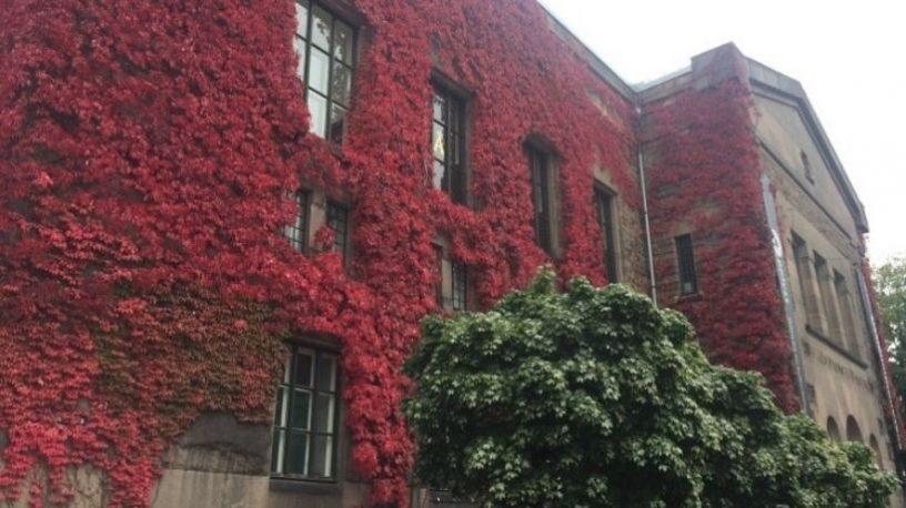 Nasjonalbibliotekets fasade med rød villvin.foto