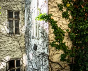 Fasade med planter. foto